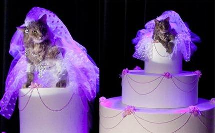 кошка в свадебном платье Мадонны