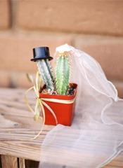 кактусы жених и невеста