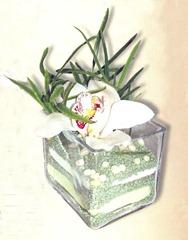 флористическая композиция с орхидеей